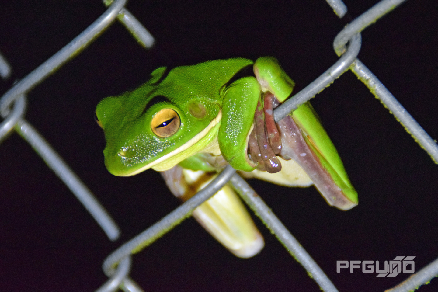 Frog On The Wire