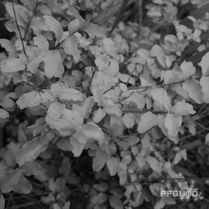 Greyscale (Daytime)