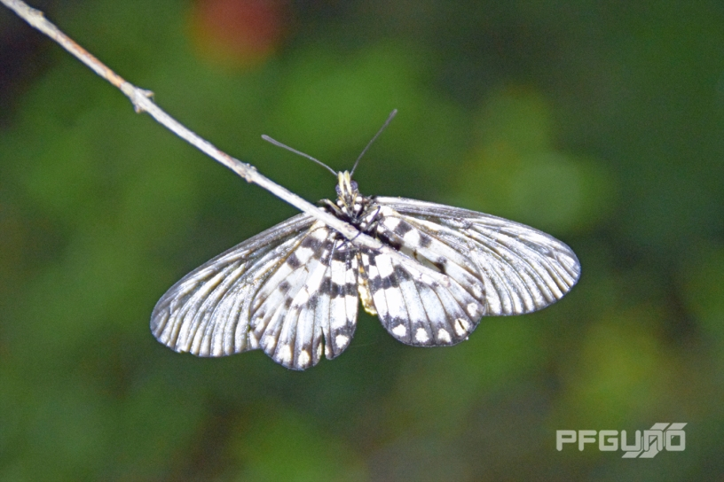 Moth On A Stick [SHOT 1]