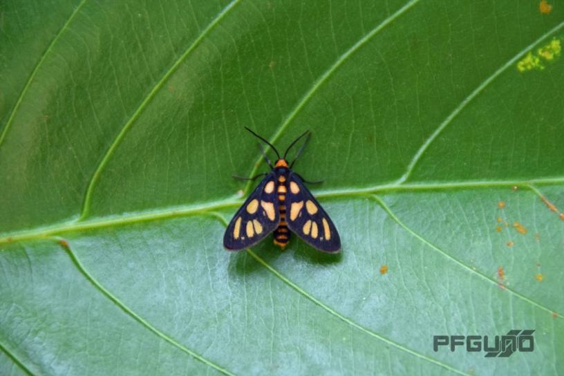 Moth On The Green Leaf