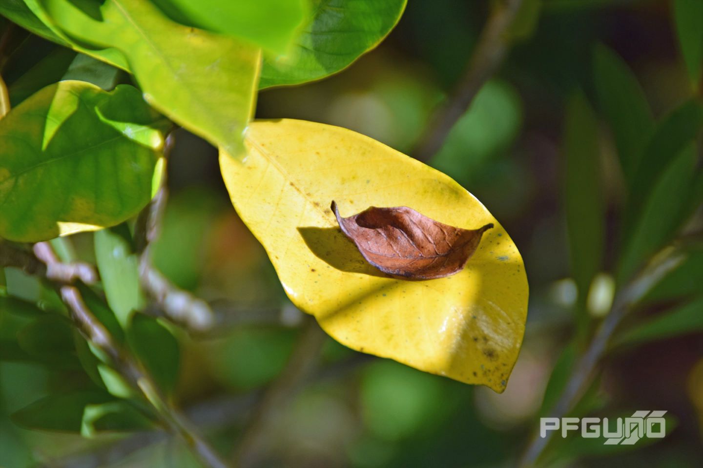 Brown And Yellow Leaf
