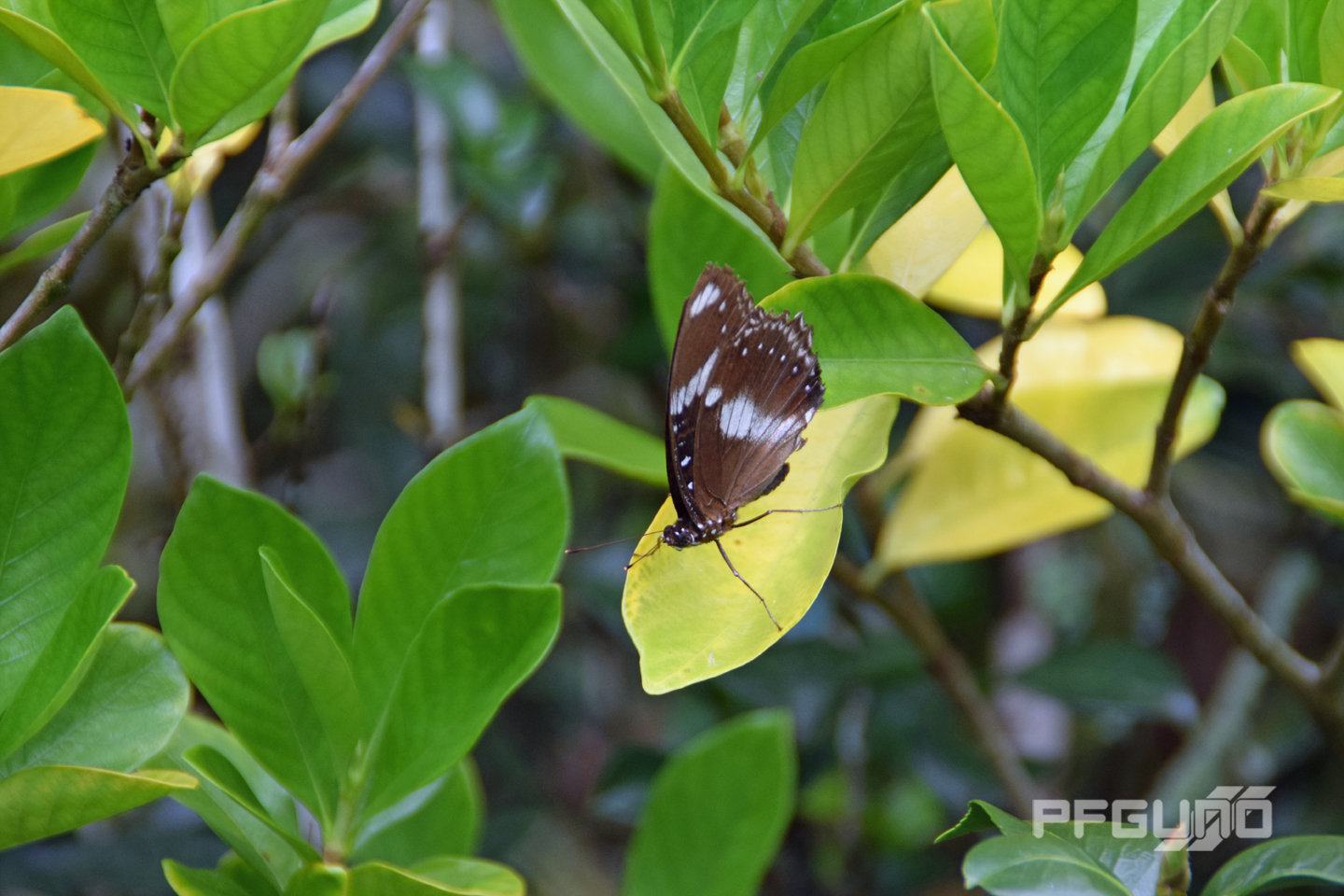 Butterfly On The Yellow Leaf