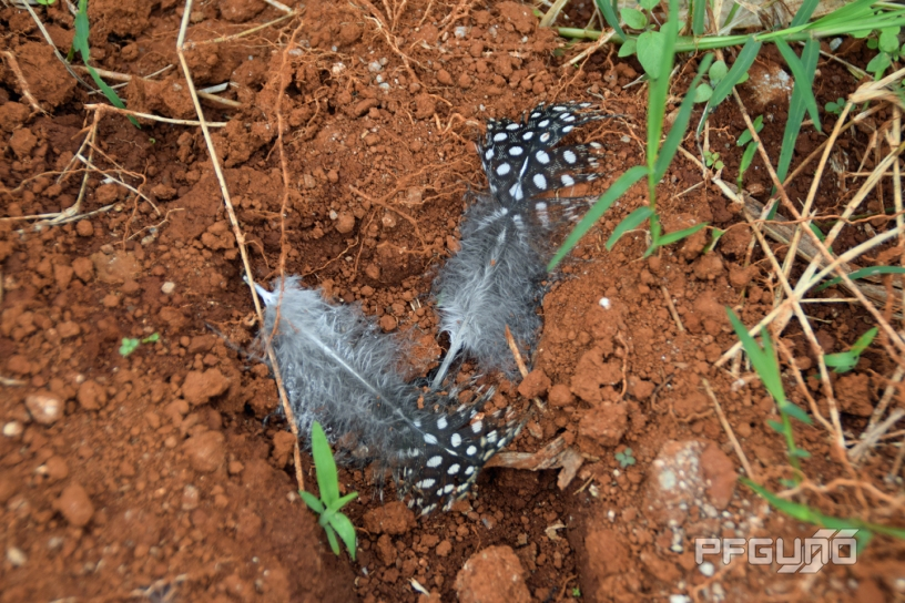 Feathers On The Brown Ground