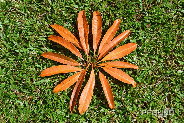 Leaves Like The Petal