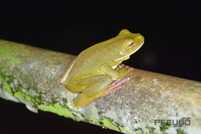 Greenish Frog On The Rail