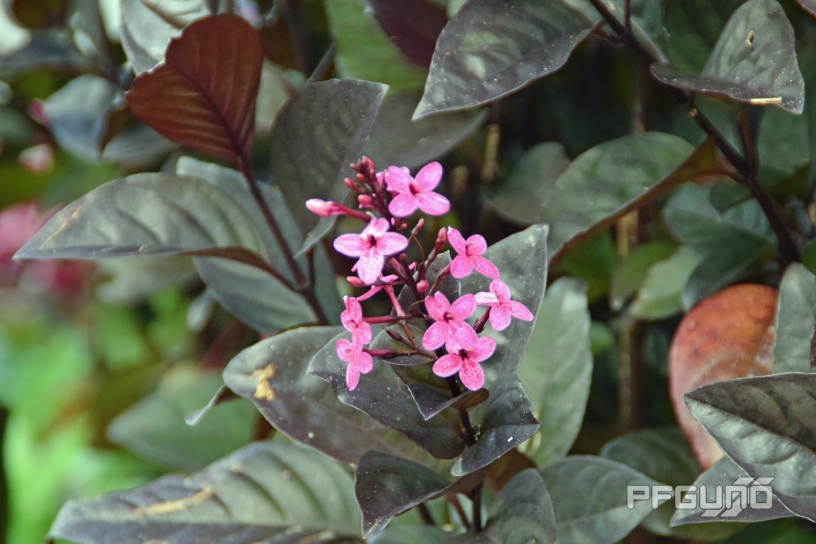 Light Purple Little Flowers