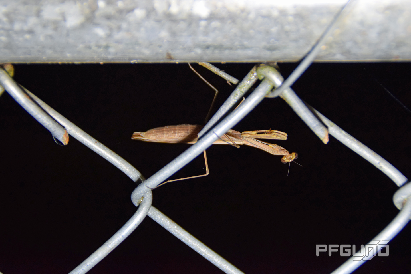 Upside Down Mantis