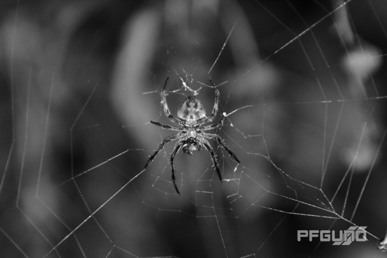 Monochrome Spider