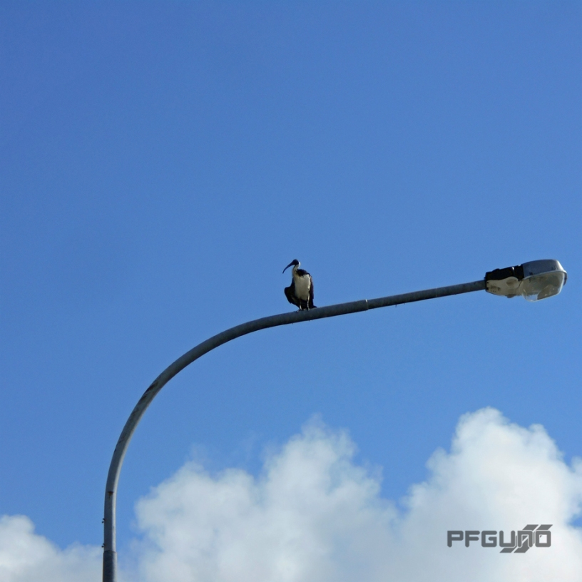 On The Lamp Post