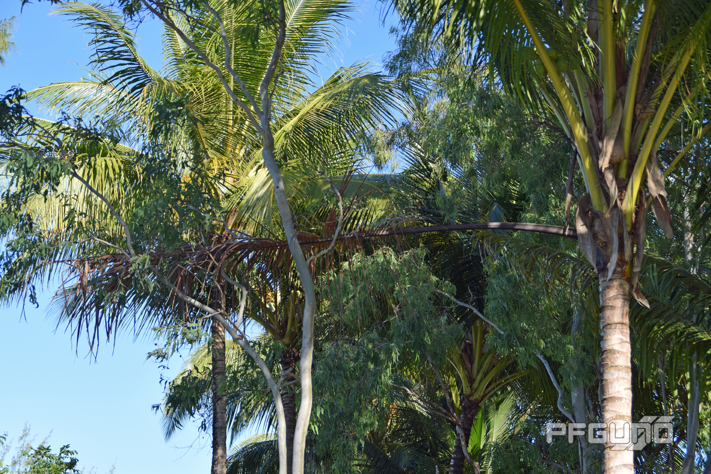 Palm Frond On The Trees